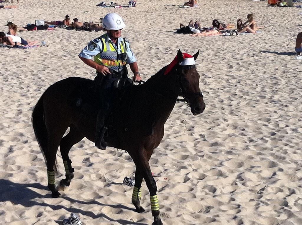 Horse Wearing at Santa Hat