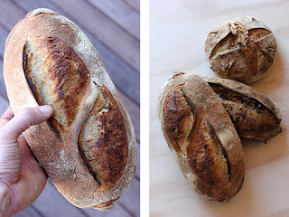 Sourdough and Walnut levain | by PiPs75