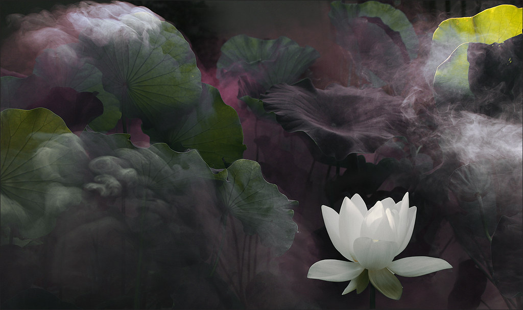 White Lotus Flower Surreal Series Dd0a6656 2 1200 White
