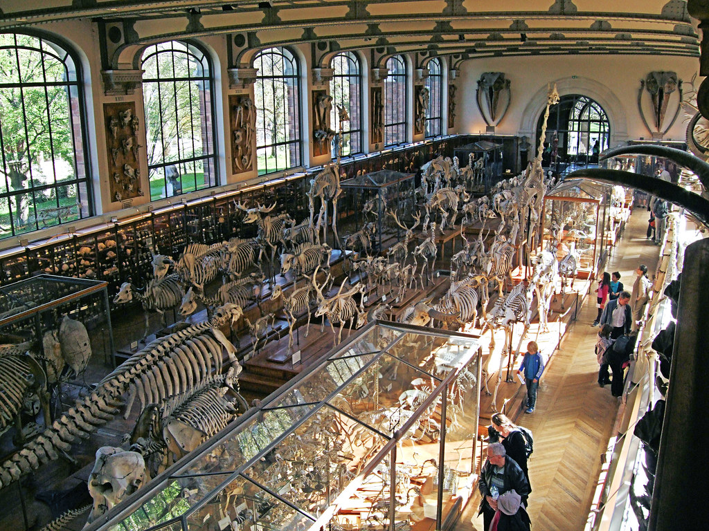 The Gallery Of Comparative Anatomy Paris Jim Linwood Flickr
