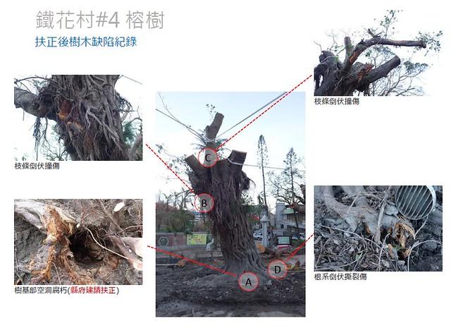 鐵花村案例,扶正後樹木缺陷紀錄。圖片來源:台灣都市林健康美化協會。