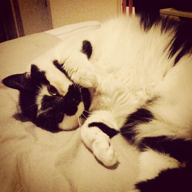 cat_pullukka_black_white