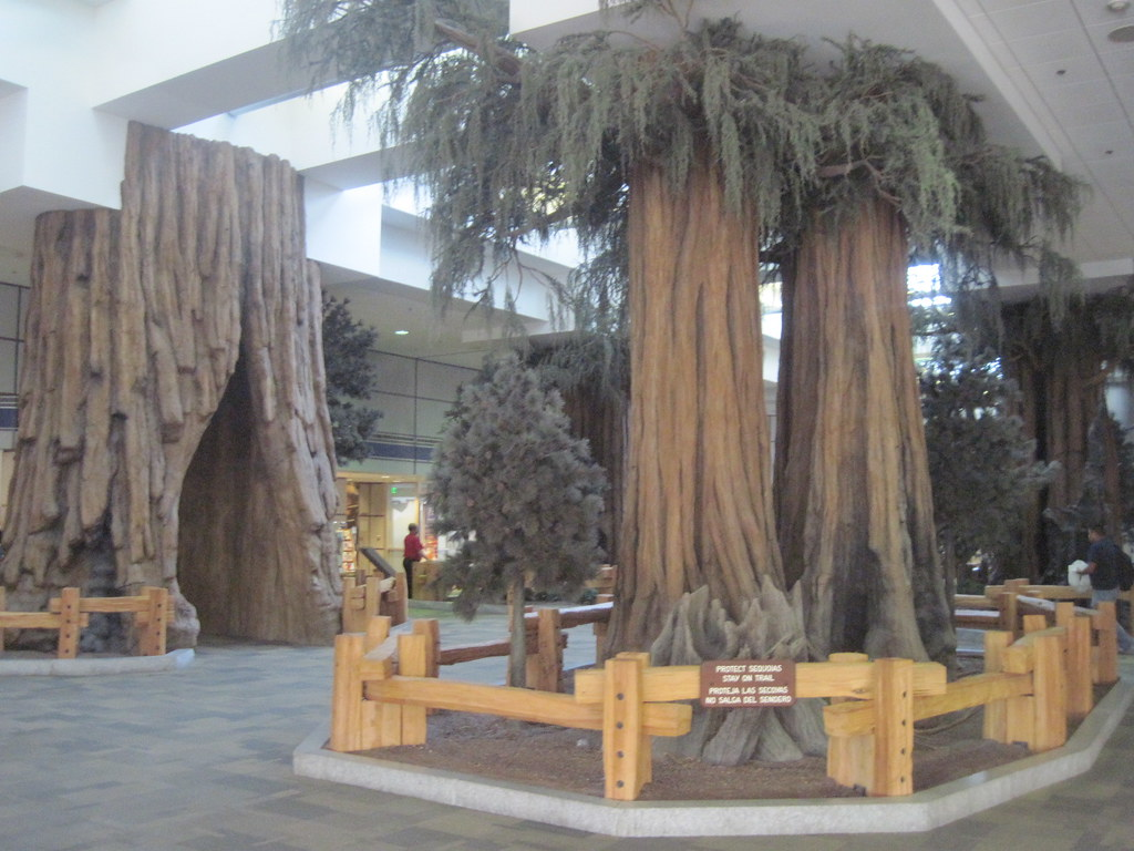 sequoia trees at Fresno Yosemite International Airport Flickr