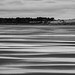 Belhaven Bay Black and White