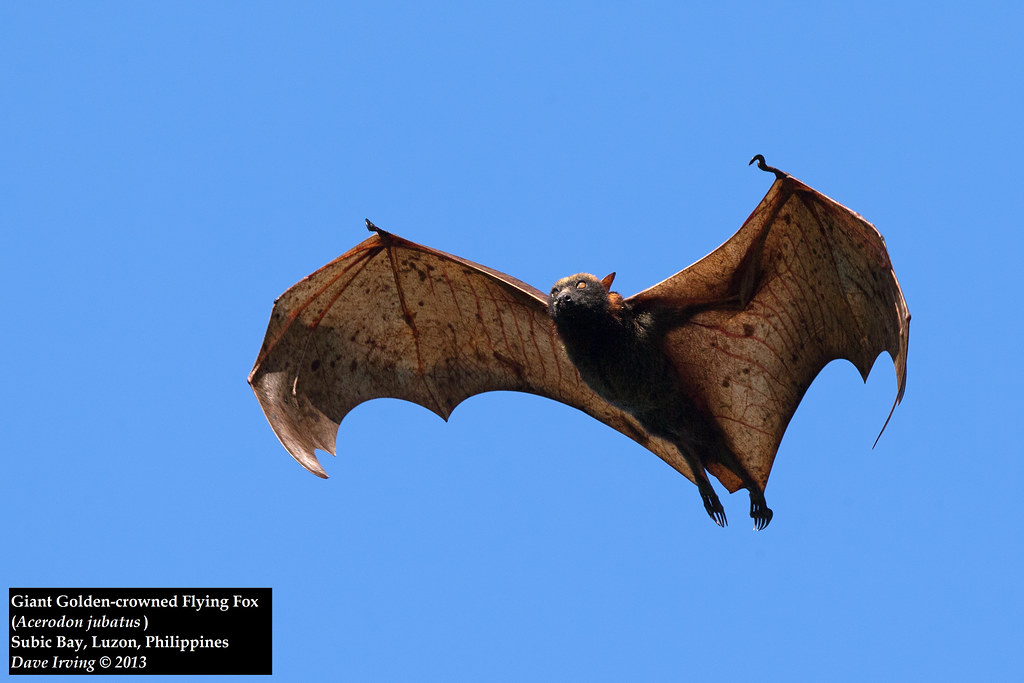 how to build a flying fox