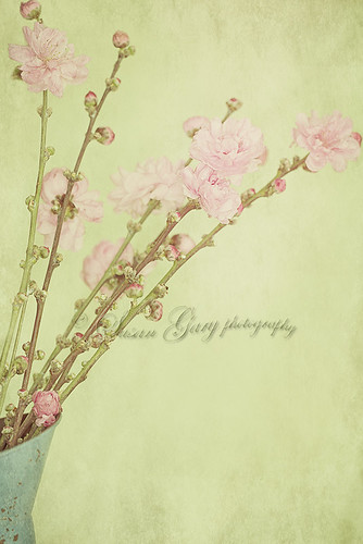 Vintage Spring Blossoms | by *GloriousNature*bySusanGaryPhotography