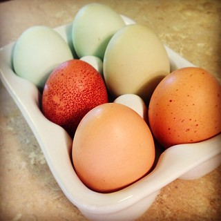 Excited to try these fresh, pastured eggs from a friend of a friend! | by Alicia's Homemaking