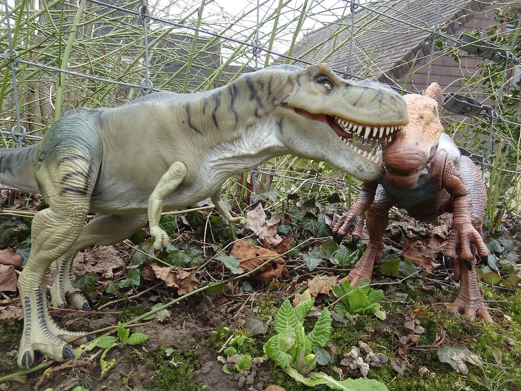 Who would win T rex versus the raptors  Quora