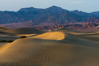 Mesquite Dunes | by vkurland