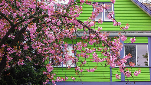 Bright Green House And Sakura A Day Glo Green Painted