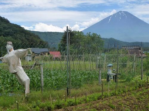 jp16-Fuji-Saiko-Village (1)