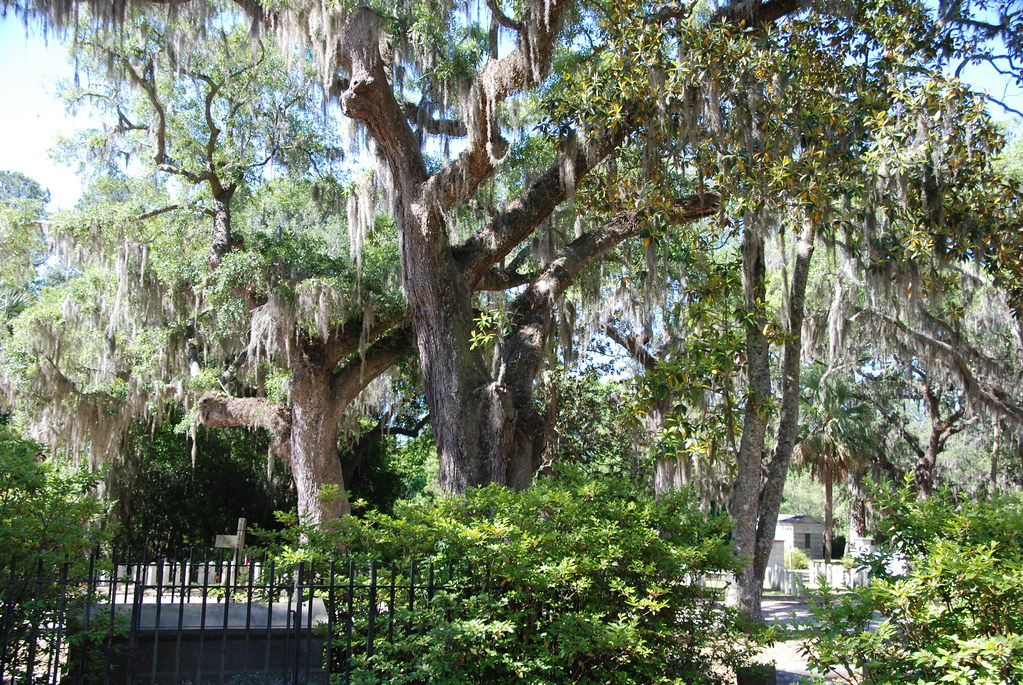 bonaventure cemetery map with 8749527348 on Index also SavannahFtJackson furthermore 27725353926369259 furthermore 2001774 as well 4418674785.