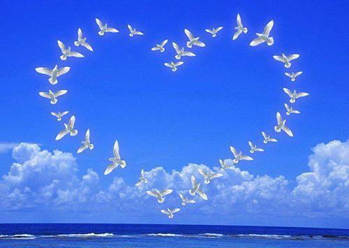 z heart of doves