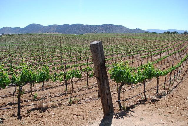 Sierra Pelona Valley Wine Festival at Reyes Winery, Agua Dulce, CA 2013