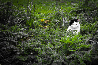 Gilly The Syon House Gardens Cat by Simon Hadleigh-Sparks | by Simon Hadleigh-Sparks