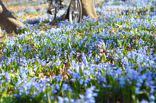 Magic Blue Forest | by Lovely Bicycle!