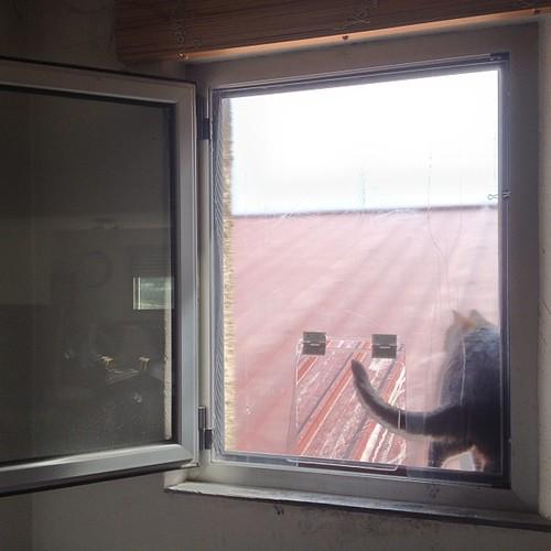Et une chati re de fen tre ouverte en plexiglas une for Une fenetre ouverte