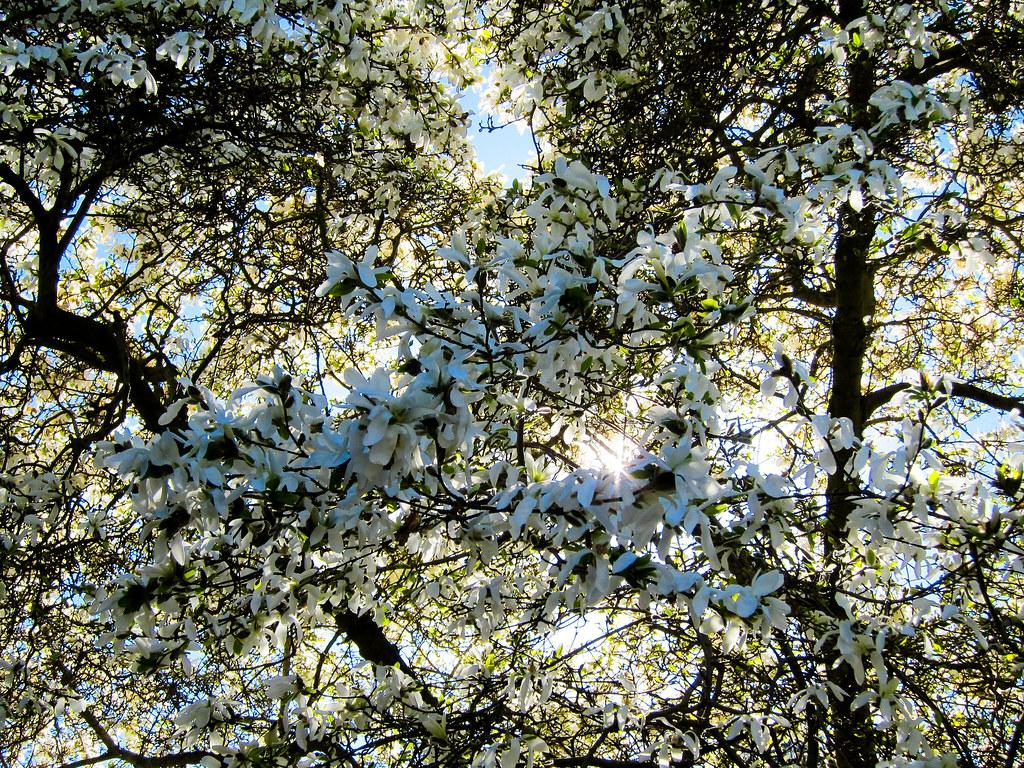 Glorious Spring The Carl S English Jr Botanical Garden I Flickr