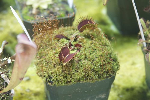 Carnivorous plants | by 1lenore