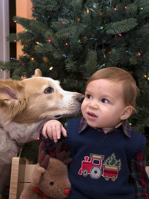 Dog Ate Ear Mite Medicine