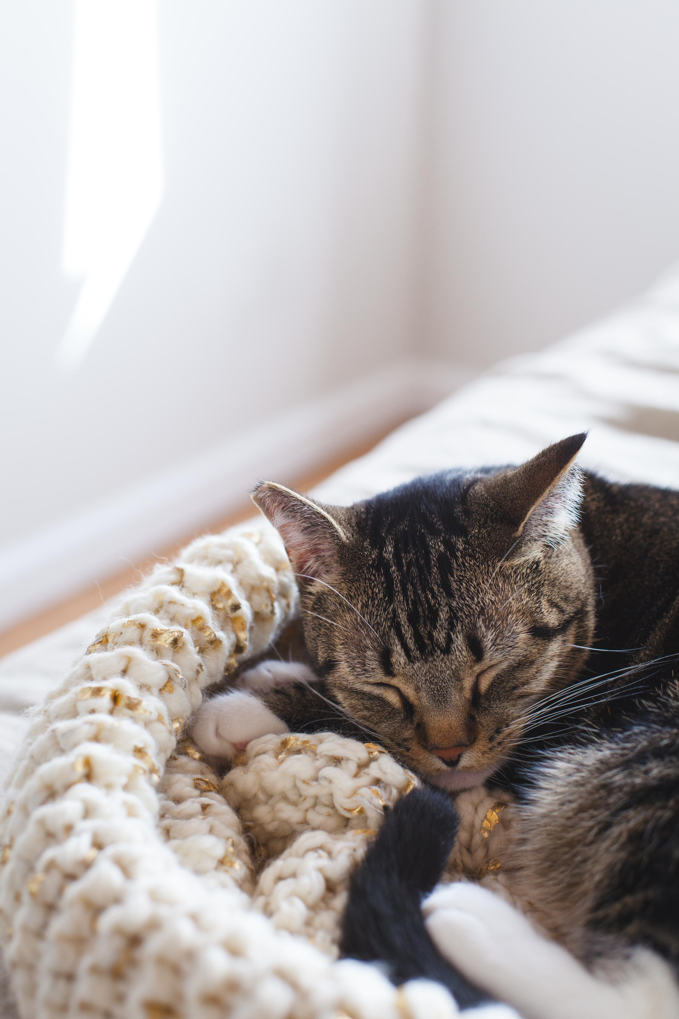 Bisou and gold leaf knit cat bed by Kayleigh Kosmas
