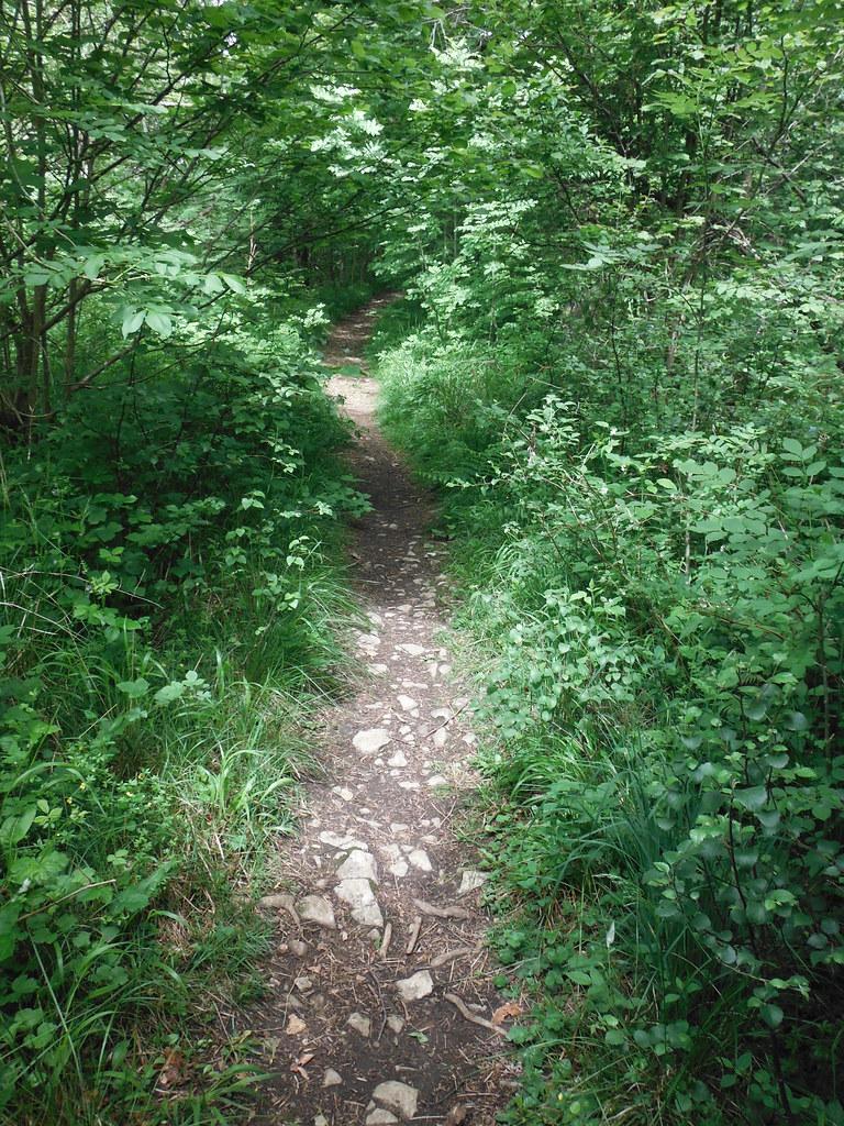 Grass Woods 3