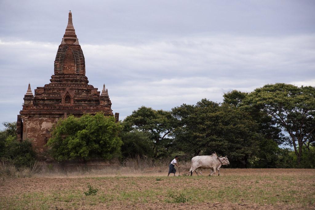 """緬甸至今仍有大量的人口在土地上維持著傳統的生活方式。(攝影:Alex Berger@<a href=""""https://www.flickr.com/photos/virtualwayfarer/28960081014/in/album-72157673284145235/"""">Flickr</a>)"""