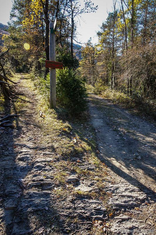 Bifurcación del camino