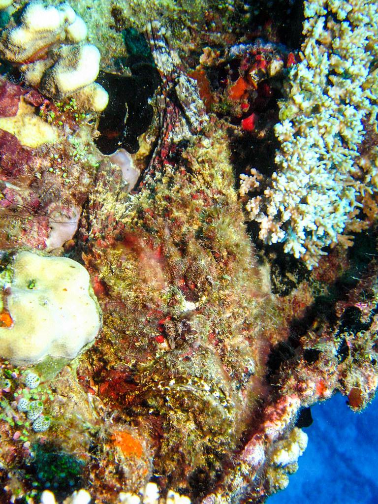 Stonefish I