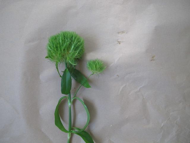 the friday flowers, helsingborg