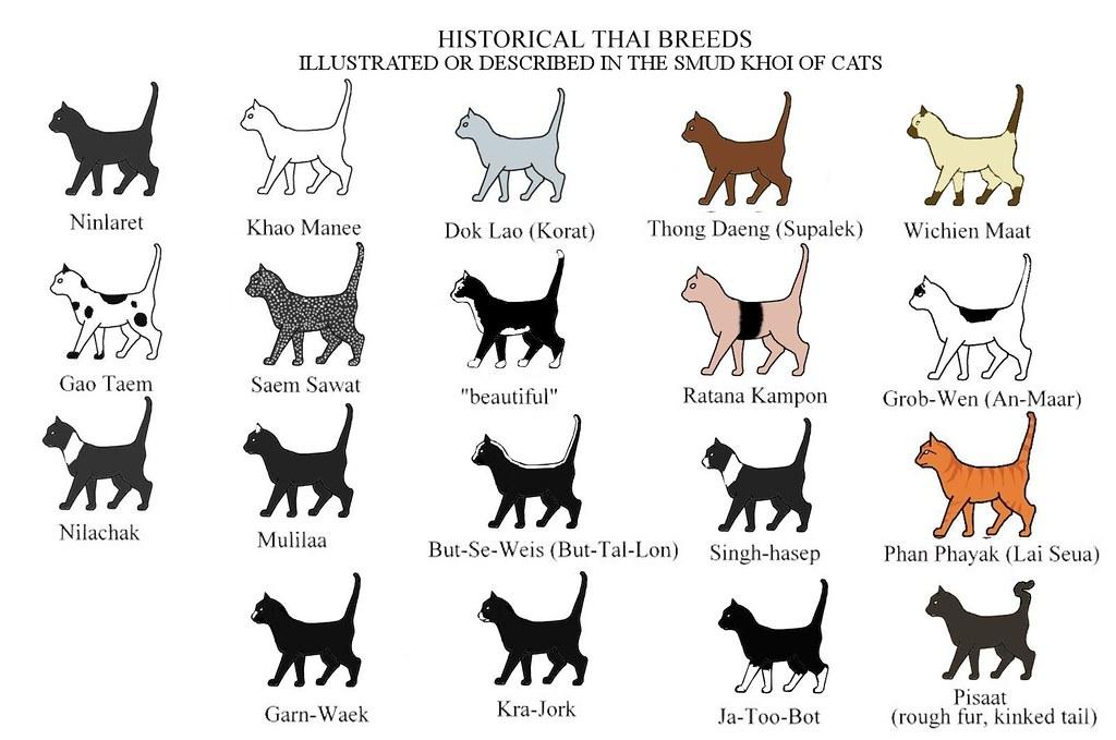 historical thai breeds chart