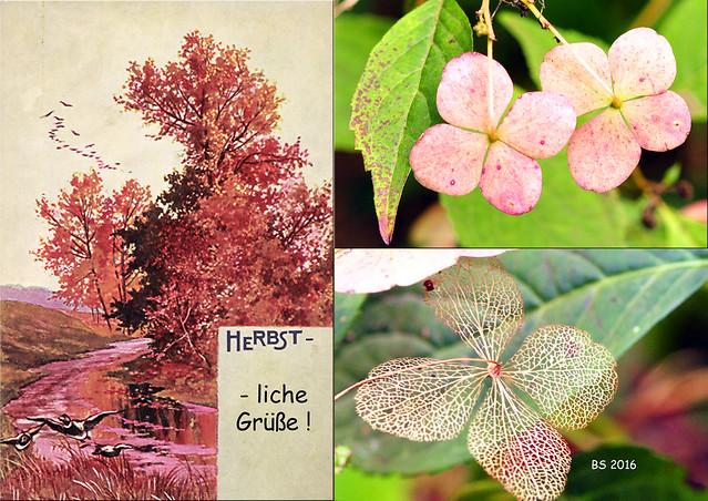 Herbstliche Grüße ... filigrane Skelettblätter wie Spitzendeckchen ... Fotos: Brigitte Stolle 2016