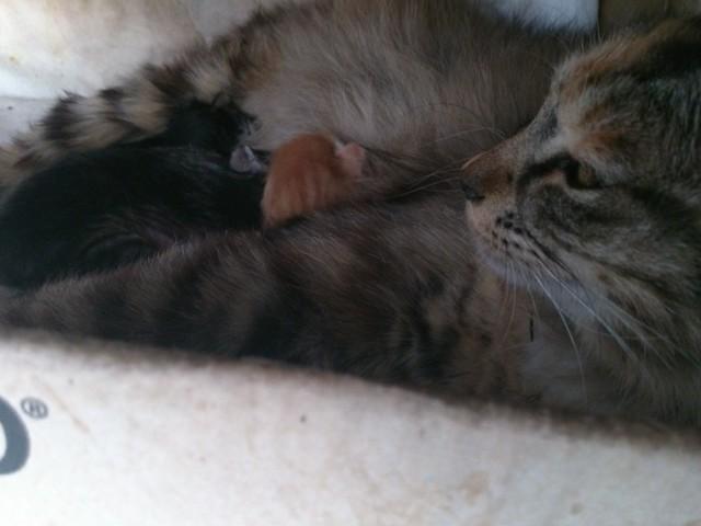 野良の姉妹猫と仔猫たちもきた