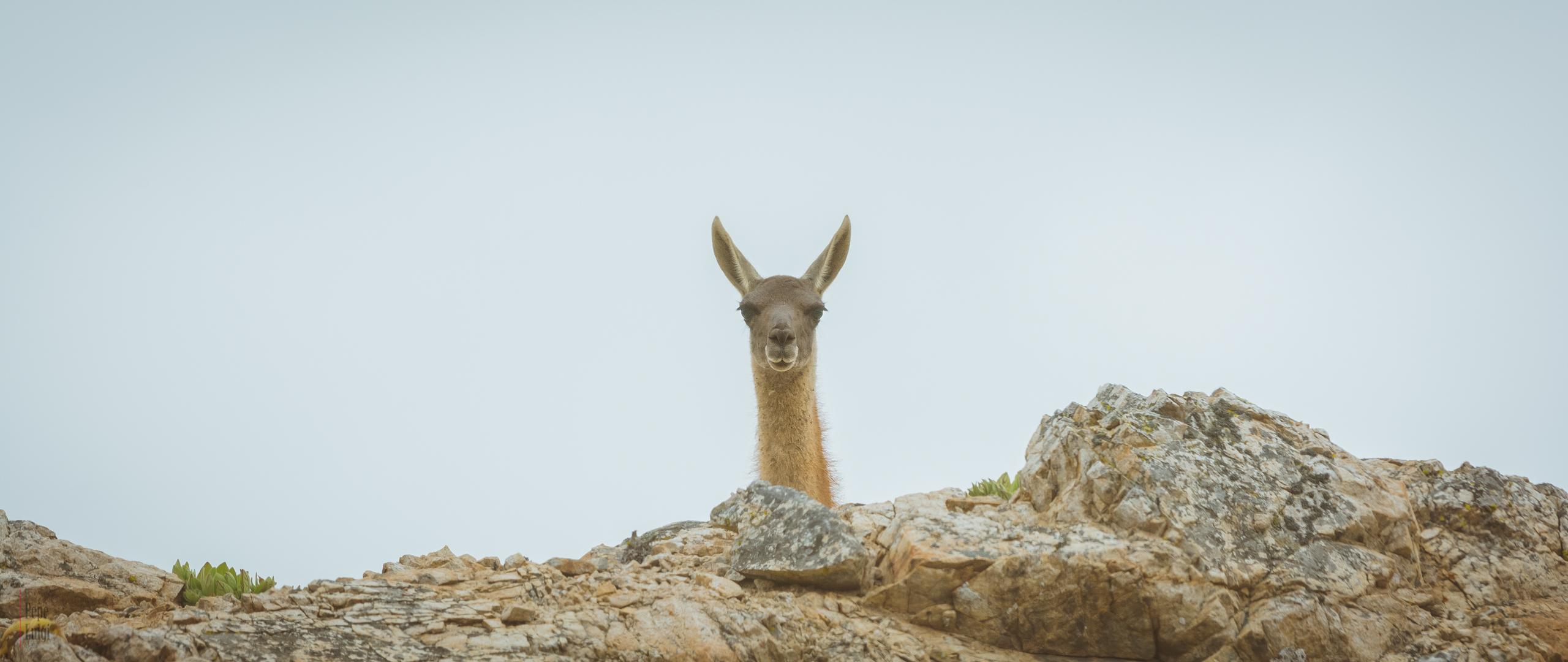 Spy | Parque Nacional Pan de Azúcar