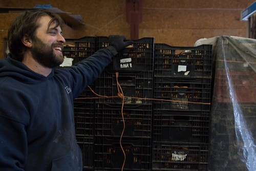 Adam Hainer delivering sweet potatoes
