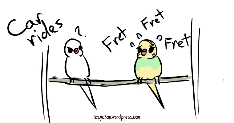 white bird dennis budgies fret