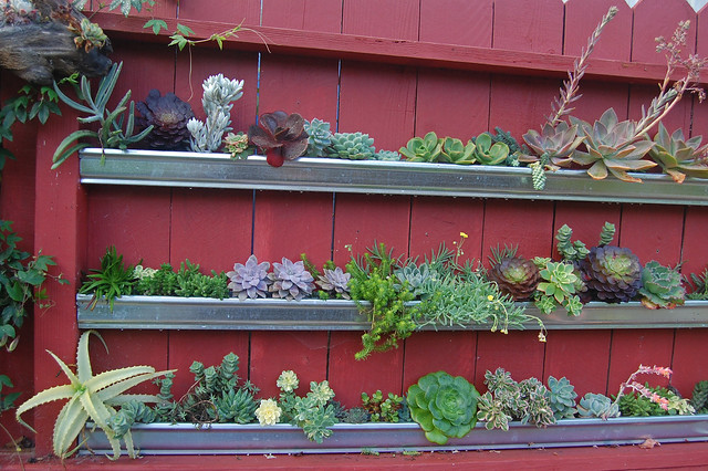 Succulents In The Gutter Far Out Flora