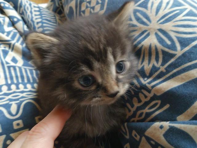 保護した仔猫1匹が里親さんに引き取られました