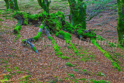 Parque Natural de #Gorbeia #DePaseoConLarri #Flickr      -1358