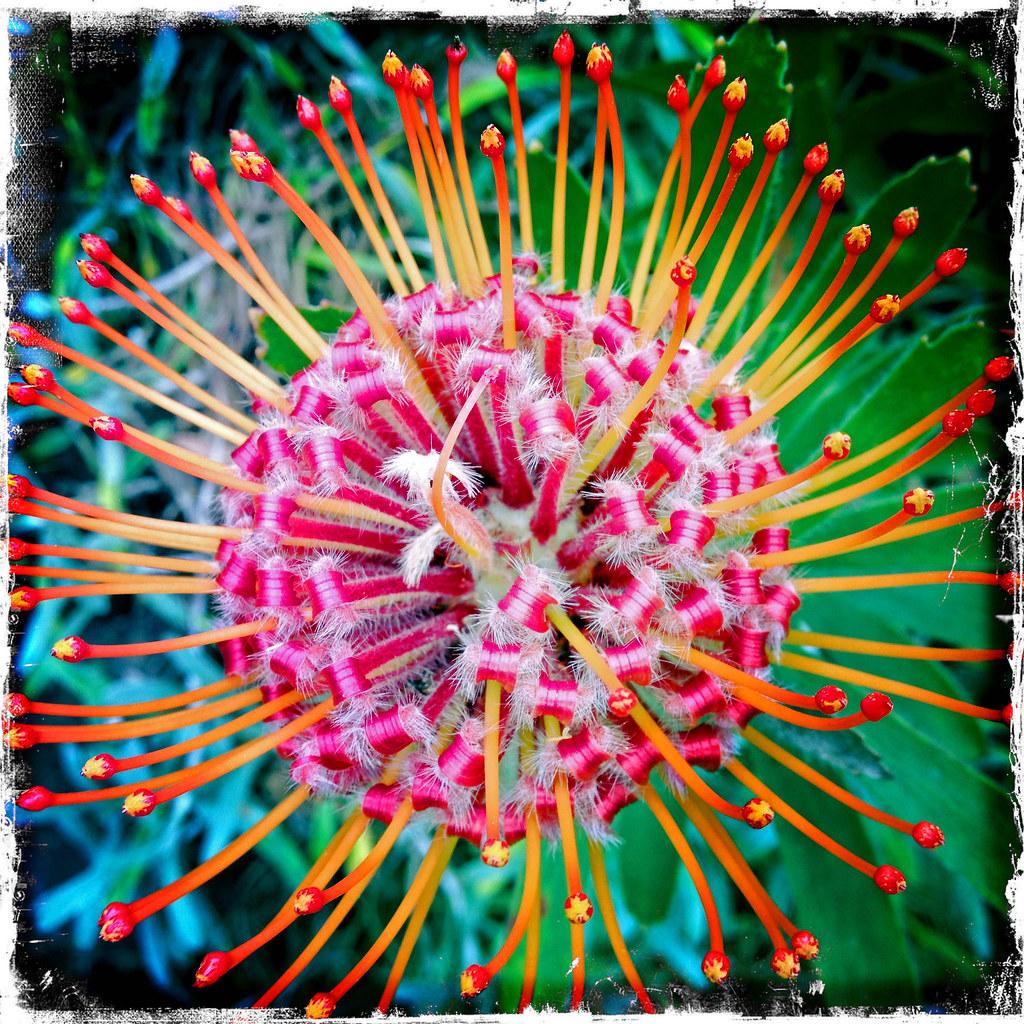 By Pedro Lastra Beauty In Maui, Kula Botanical Gardens. | By Pedro Lastra