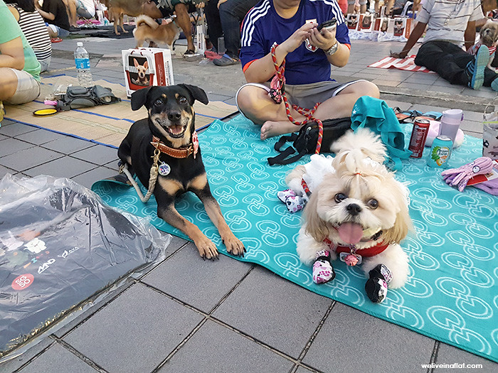 dog events, pet events in singapore