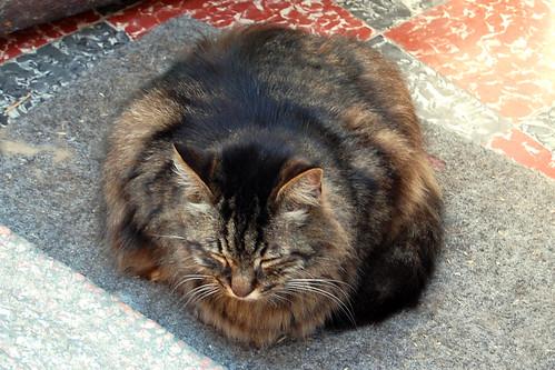Katze Katzenfotos Katzenzitate Katzengedichte ... Foto: Brigitte Stolle