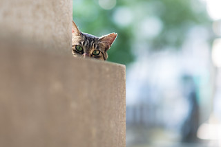 Shrine Cat ⑦ - I see you ! | by pouchin