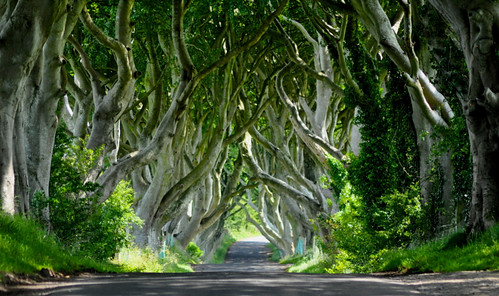 Dark hedges of Armoy | by horslips5