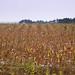 Iowa County Drought