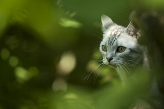The jungle kitty | by Temvb
