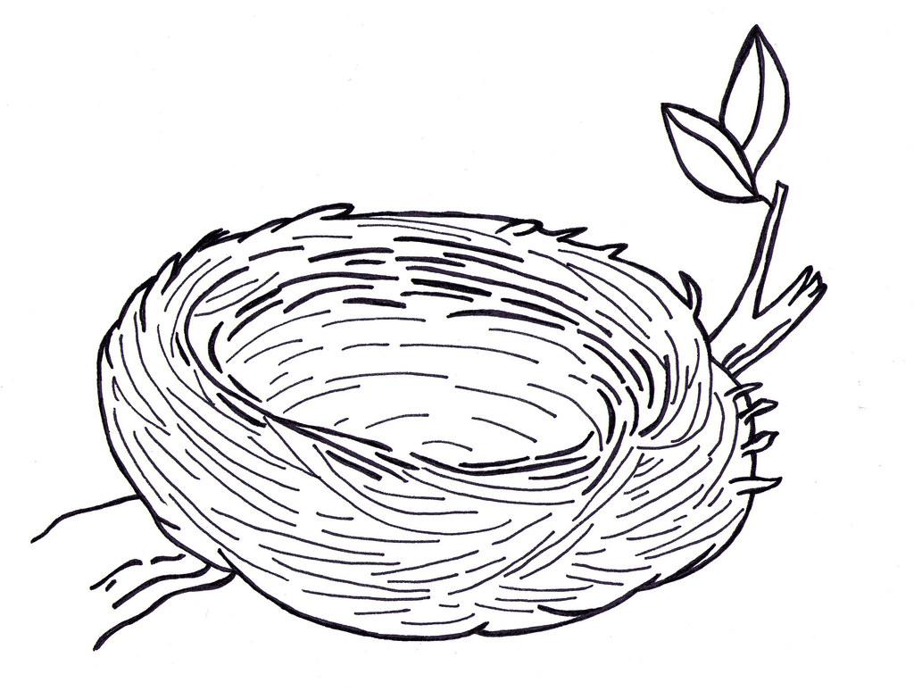 Bird Nest Drawing 7