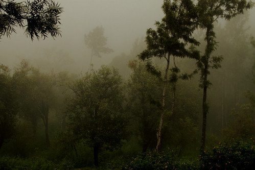 Misty Yercaud | by Sonali Dalal