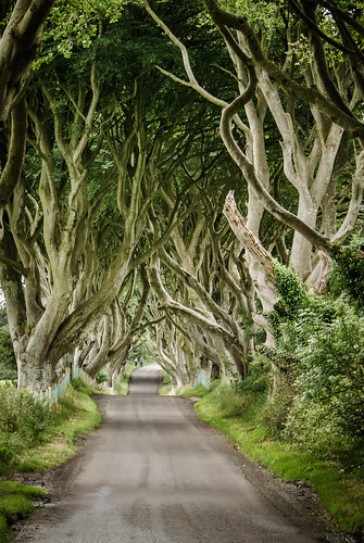 the dark hedges, northern ireland | by laughlinc