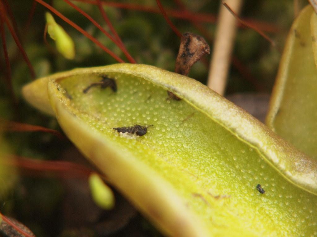 New Leaf Food Villagers